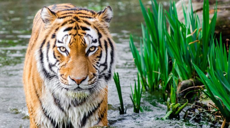 12 Best Wildlife Tourism Destination in India