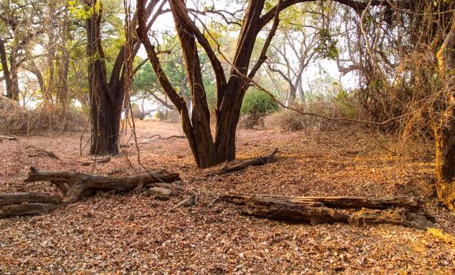 Pirschfahrt im South Luangwa National Park