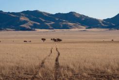 Auf Pirschfahrt über das Farmgelände der Drifter's Desert Lodge, Namibia
