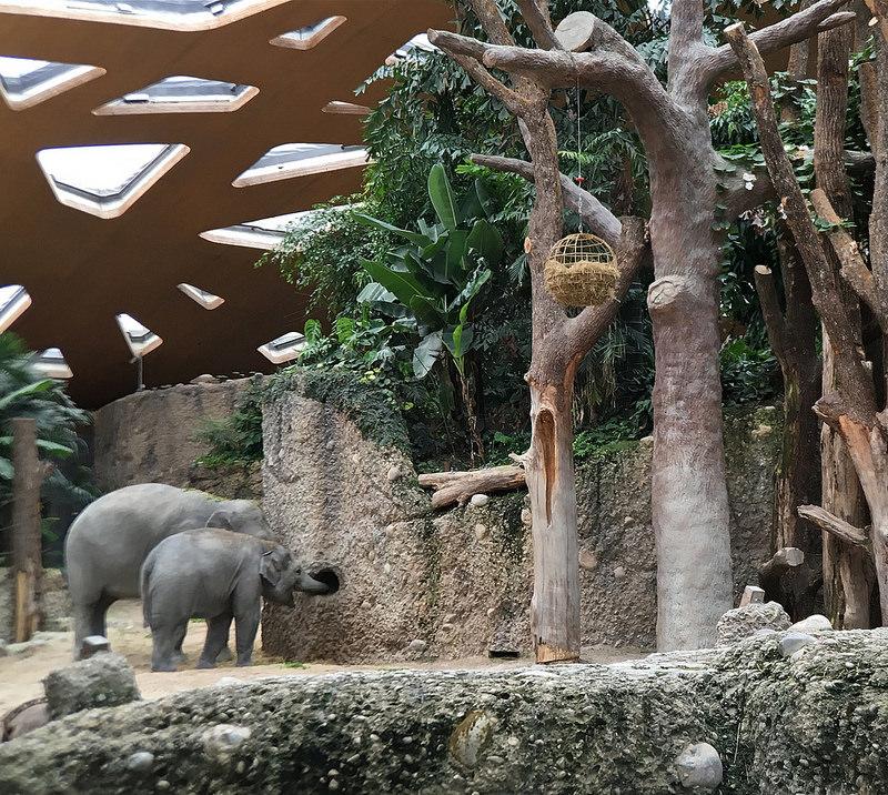 kaeng krachan elephant park