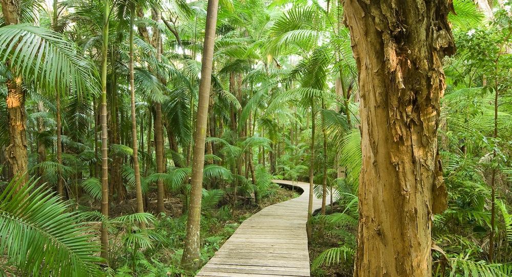 Rainforest walks at Byron at Byron Resort and Spa