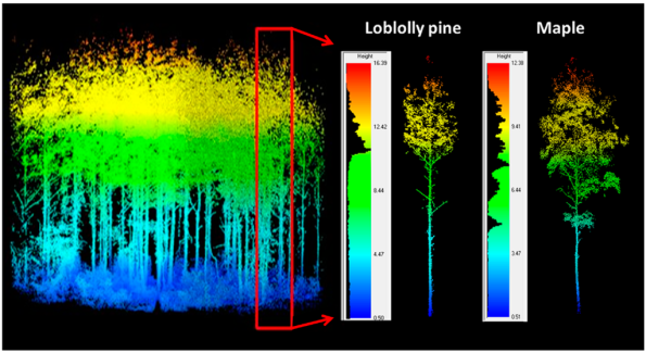 Extraction of individual trees using crown widths predicted from terrestrial laser scanning (TLS) derived diameter at breast height.
