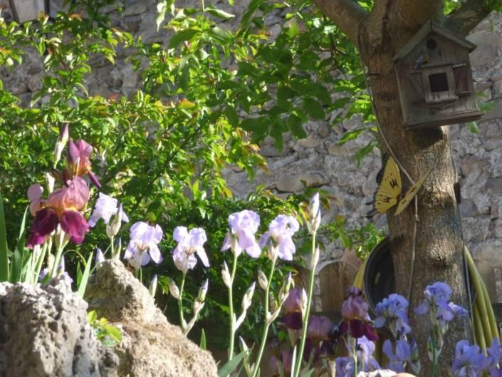 iris au village ubaye