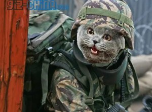 chinese cat army 300x221 China Unleashes Cat Army on Rodent Invaders!