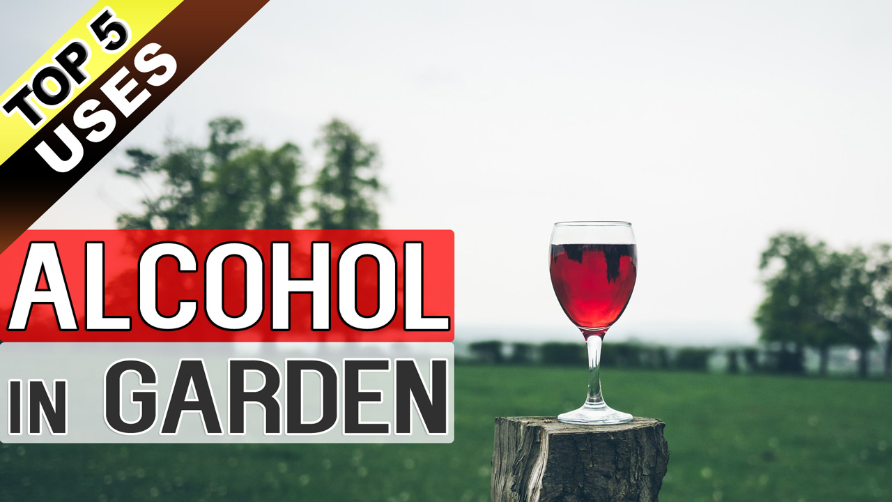 Beautiful Rubbing Alcohol On Can You Drink Rubbing Alcohol Alcohol Garden Effects Drinking Garden Effects Get Drunk Can You Safely Drink Rubbing Alcohol Drinking Rubbing Alcohol On Plants Alcohol bark post Can You Drink Rubbing Alcohol