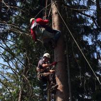 Die Bergwacht klettert an die Stelle des Verunglückten, macht sich ein Bild vom Gesundheitszustand und lässt den Gleitschirmflieger sicher zu Boden.