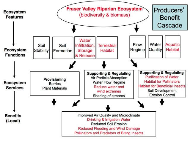 BCEcosystem