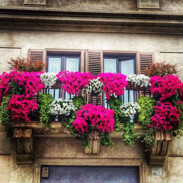 There is beauty everywhere in Rome - even in the flowery window baskets