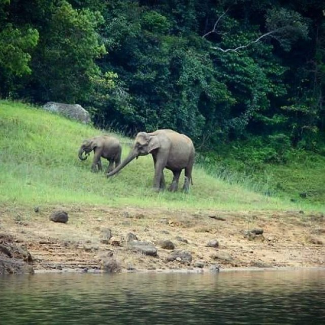 Spotting an elephant in the wild at Periyar Reserve in Thekkady, Kerala