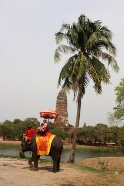 Eléphant - Ayutthaya - Thailande