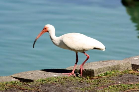 Oiseau - Orlando - Floride