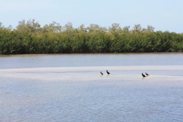 Sanibel Island - Floride