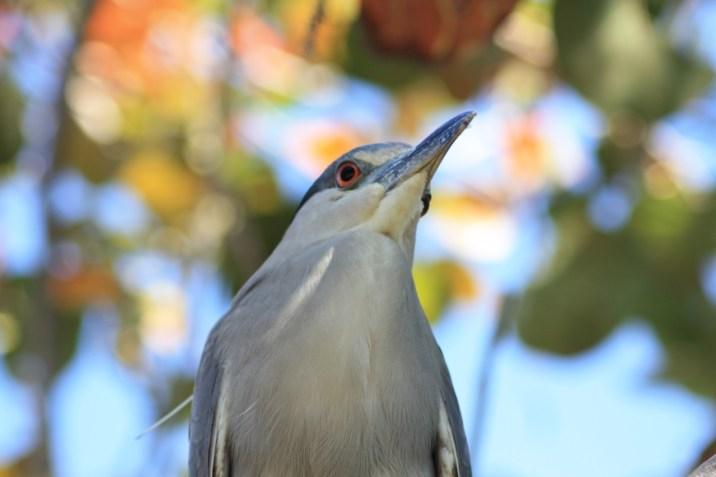 Refuge oiseaux - Floride