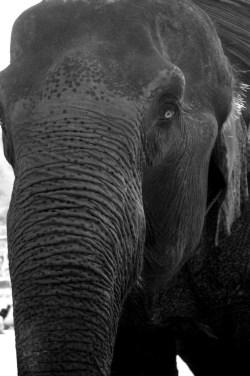 elephant - trek - chiang mai