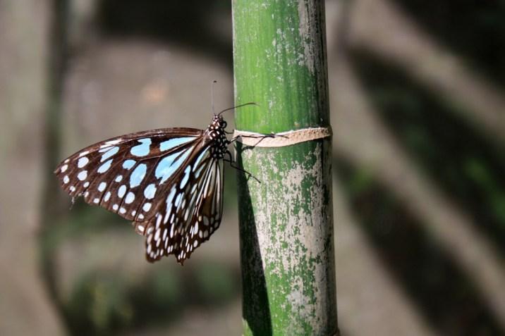 Papillon- trek - chiang mai