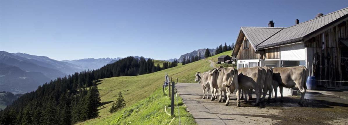 Die Alp Rona im Prättigau