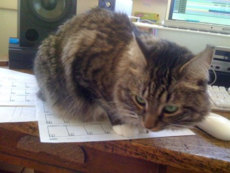 Larry's cat Astrid sitting on track sheets during cataloging