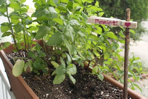 DIY Plant Marker