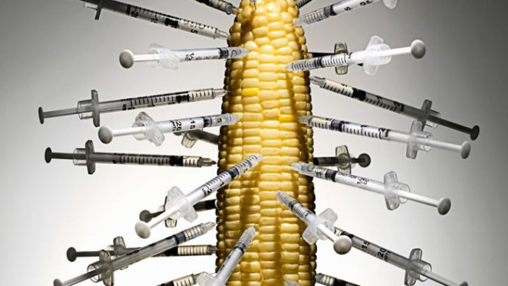 GMO CORN: One Woman's Health Journey to Hell & Back