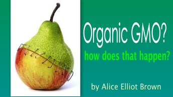 Can GMO Be Called Organic?
