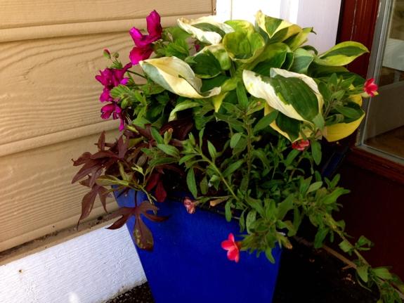 New Pinterest inspired Hosta and flowering pots