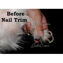 Small Crop Of Dog Dew Claw