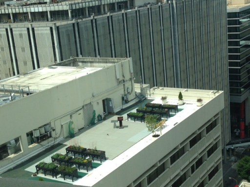 rooftop garden in downtown Atlanta