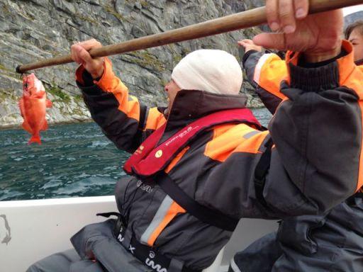 catching redfish in Greenland