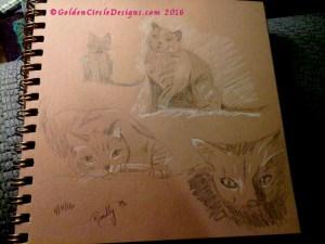 CatSketches