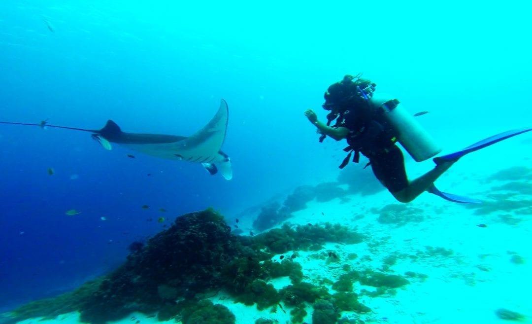 Scuba Diving Tips For Beginners