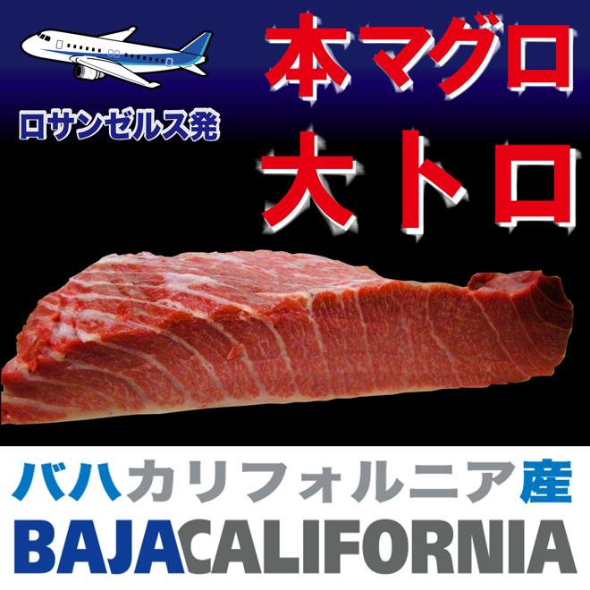 北太平洋 バハ カリフォルニア産 本マグロ 大トロ