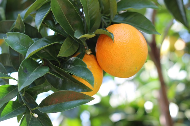 Does Citrus fruits cause nasal-problems_3