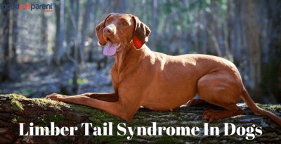 Limber Tail Syndrome In Dogs Feature Image