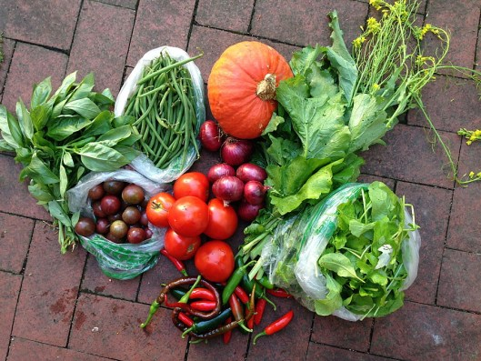 City Commons CSA distribution wk 12