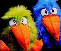 cuckoo_birds_md