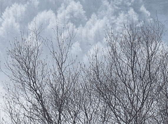 Nikon D800E Sample image Snow Trees
