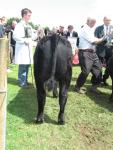 Goulding Jim Dandy at the Athlone Show 2012