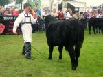 David adding the final touches to Jim Dandy at the Tullamore Show 2012