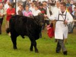 Best foot forward at the Tullamore Show 2012