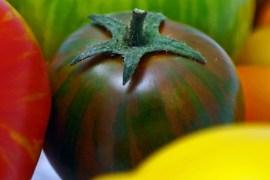 Tomatenrausch-1