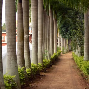 Reflections on Yoga Teacher Training: Arriving in India