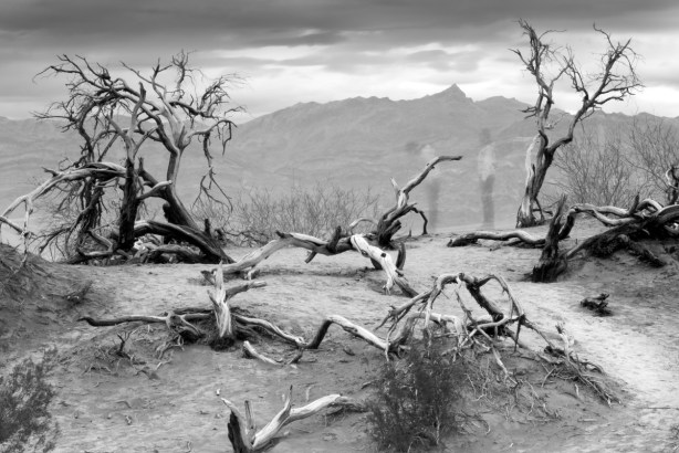 Sony A7R with Canon 50mm 1.8 in Death Valley Black and White