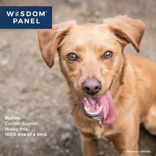 Medium Of Dog Intelligence Test