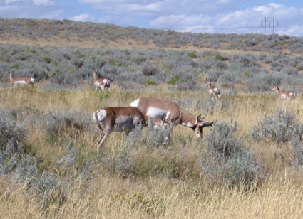 wyoming antelope hunting