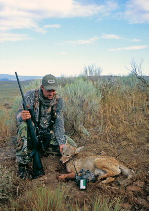 bird hunting coyote