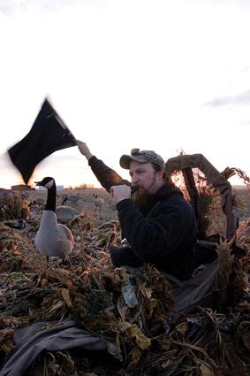 Calling Ducks tips