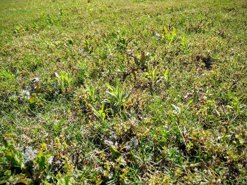 Fullsize Of Best Lawn Weed Killer