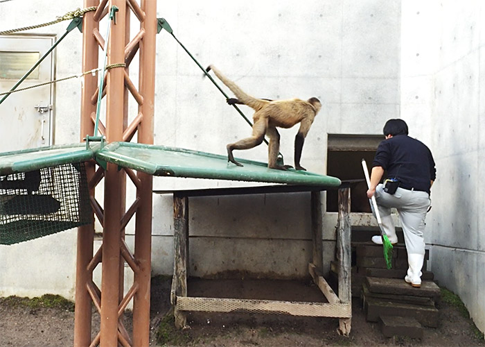 One of the monkey sections at Asahiyama Zoo, Asahikawa, Hokkaido
