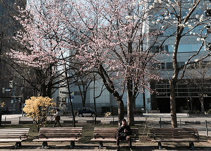 The scenic Odori Park during the sakura season