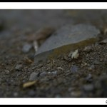 espagne-coll-de-nargo-ivan-olivier-photographie-10